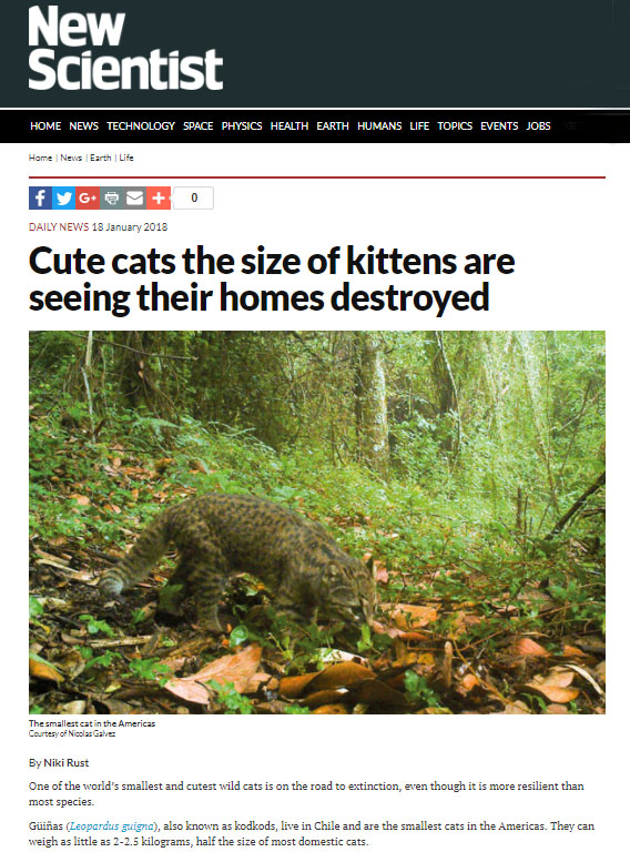 Güiña article in New Scientist