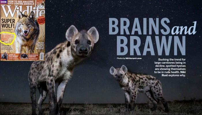 BBC Wildlife March 2018 Niki Rust spotted hyenas