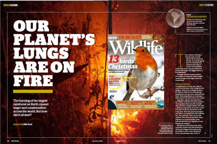 BBC Wildlife magazine December 2019